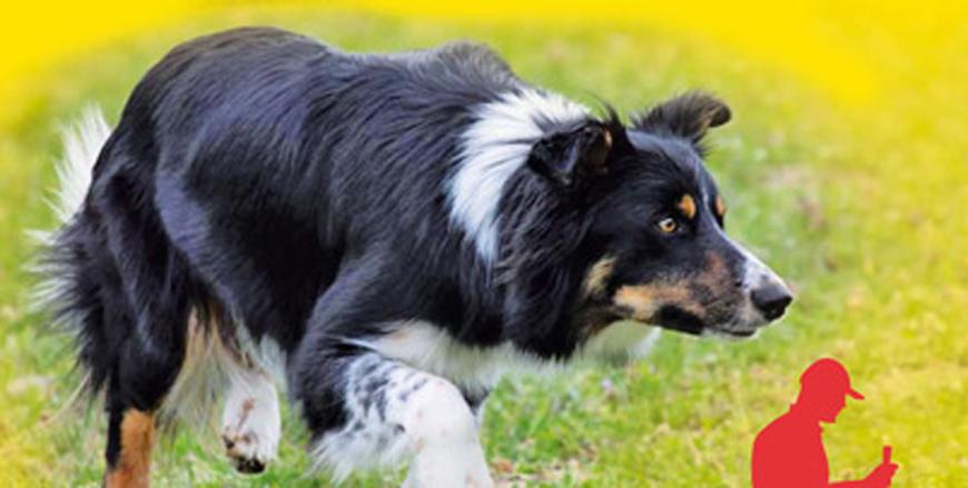 site de rencontres chiens